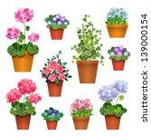 Flowers In Pots.  Vector...