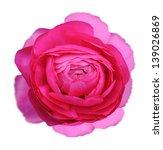 red persian buttercup flower... | Shutterstock . vector #139026869