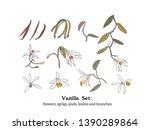 vector  set of vanilla plant...   Shutterstock .eps vector #1390289864