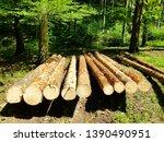 cut felled logs in the forest | Shutterstock . vector #1390490951