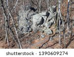Large Rock Formation And Birch...