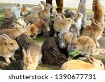 Stock photo lovely rabbits okunoshima island in hiroshima prefecture in japan is famous as rabbit island 1390677731