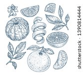 orange botanical illustration.... | Shutterstock .eps vector #1390814444