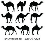 silhouettes of camel vector | Shutterstock .eps vector #139097225