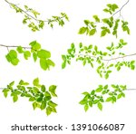set of branches of tree... | Shutterstock . vector #1391066087