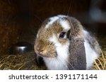closeup of a cute rabbit inside ... | Shutterstock . vector #1391171144