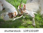 angry goats fighting on a sunny ... | Shutterstock . vector #139133189