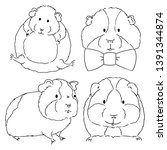 Sketches of different guinea pigs sketches on white background. Set of drawn guinea pigs by free hand. Animals sketches drawn by hand.