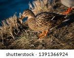 wildlife animals wallpapers and ...   Shutterstock . vector #1391366924