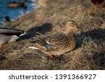 wildlife animals wallpapers and ...   Shutterstock . vector #1391366927