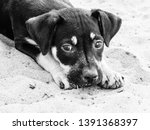 A Small Cute Black Dog Lying On ...