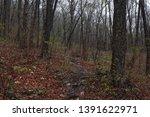 forest landscape. dark... | Shutterstock . vector #1391622971