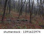 forest landscape. dark... | Shutterstock . vector #1391622974