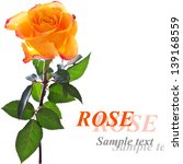 rose isolated on white... | Shutterstock . vector #139168559