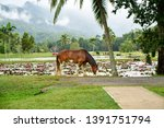 holiday with nature in cairns | Shutterstock . vector #1391751794