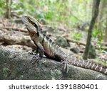 australian water dragon   which ... | Shutterstock . vector #1391880401