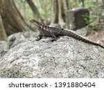 australian water dragon   which ... | Shutterstock . vector #1391880404