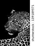 leopard   Shutterstock . vector #139189571
