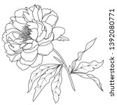 illustration with peony flower... | Shutterstock .eps vector #1392080771