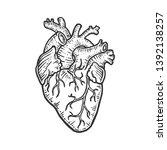 human heart sketch engraving... | Shutterstock .eps vector #1392138257