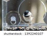 One Chickadee Bird Sitting...