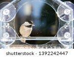 One Small Chickadee Bird...