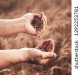 man pours wheat from hand to... | Shutterstock . vector #1392253781