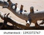felled trees  windbreak  wood... | Shutterstock . vector #1392372767
