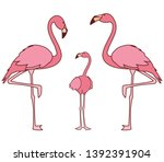 exotic pink flemish family birds | Shutterstock .eps vector #1392391904