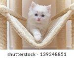 Cat  Kitten  Cat House  Cat Tree