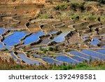 honghe yuanyang  samaba rice... | Shutterstock . vector #1392498581