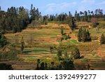 honghe yuanyang  samaba rice... | Shutterstock . vector #1392499277