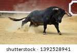 Bull In Traditional  Spectacle...
