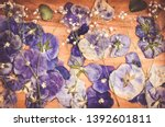 floral herbarium. dried pansies ... | Shutterstock . vector #1392601811