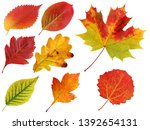 Autumn Leaves Isolated On A...