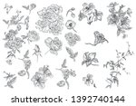 collection of vector hand drawn ... | Shutterstock .eps vector #1392740144