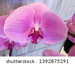 beautiful pink orchid flowers... | Shutterstock . vector #1392875291