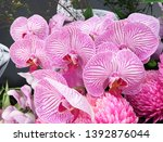 beautiful pink  white orchid... | Shutterstock . vector #1392876044