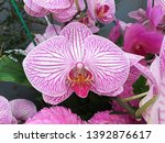 beautiful pink  white orchid... | Shutterstock . vector #1392876617