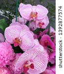 beautiful pink  white orchid... | Shutterstock . vector #1392877574