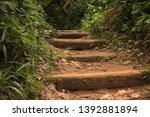 Dense Vegetation In Hawaan...