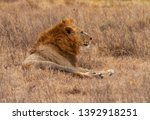 male lion close up side view... | Shutterstock . vector #1392918251