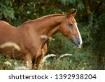 brown horse with white sign and ... | Shutterstock . vector #1392938204
