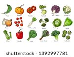 set of colored vegetables.... | Shutterstock .eps vector #1392997781