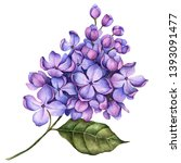 Watercolor Branch Of Lilac...