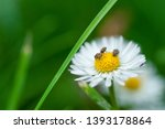 Beautiful White Flower With...
