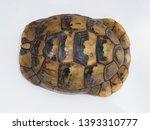 Stock photo spur thighed tortoise or greek tortoise testudo graeca bulgaria april 1393310777