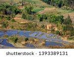 honghe yuanyang  samaba rice... | Shutterstock . vector #1393389131