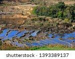honghe yuanyang  samaba rice... | Shutterstock . vector #1393389137
