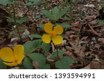 small yellow flowers in the... | Shutterstock . vector #1393594991